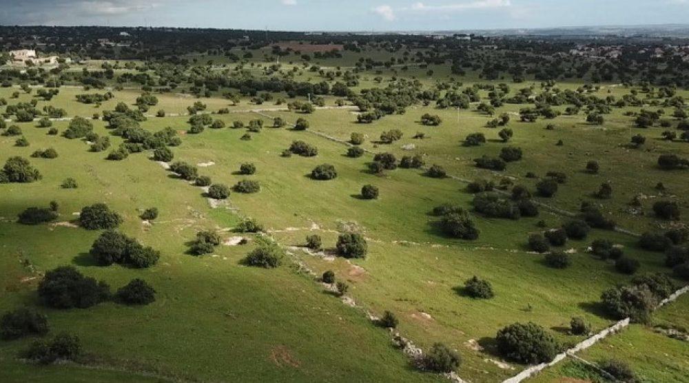L'area in cui dovrebbe sorgere l'impianto di biometano